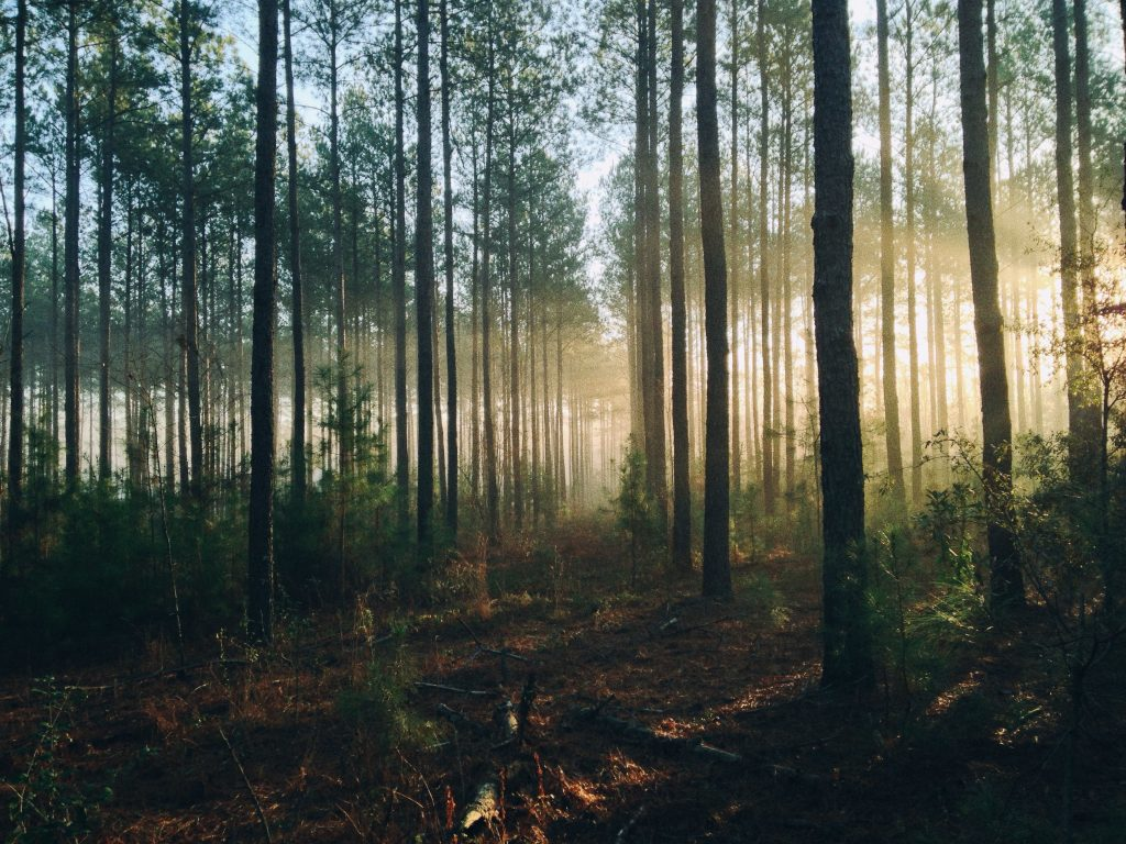 Random forest for feature selection